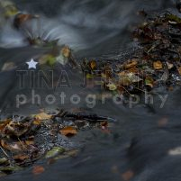 20141003_Lumsdale Valley_0150