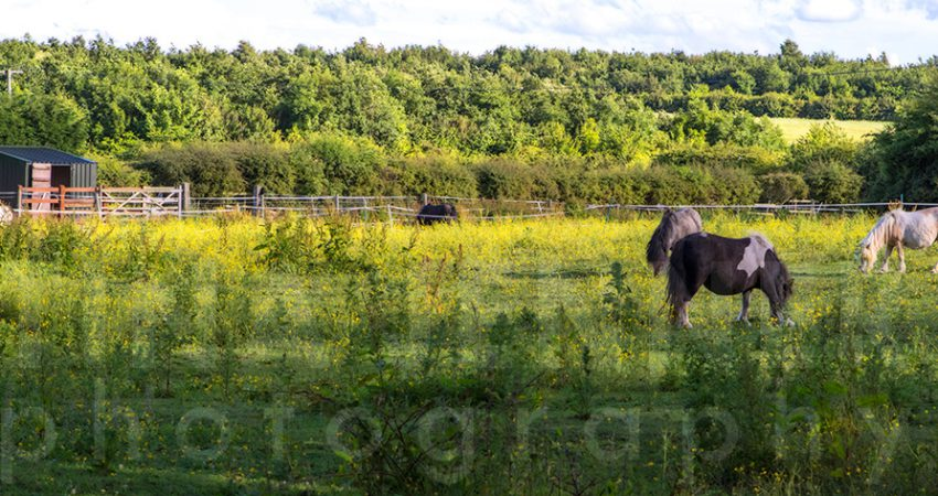 20150705_Chesterfield_0014